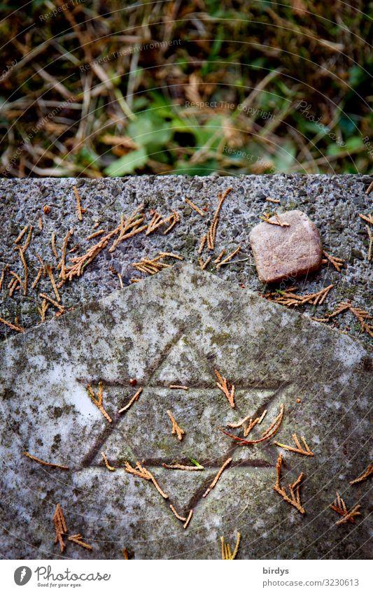 jüdischer Grabstein Herbst Pflanze Jüdischer Friedhof Judentum Stein Zeichen Davidstern authentisch positiv grau grün rot Liebe Menschlichkeit Verantwortung