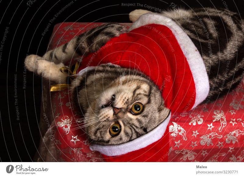 Katze in einer Weihnachtsmütze bezaubernd Tier schön Fleischfresser Hauskatze Weihnachten & Advent klaus niedlich Dekoration & Verzierung Katzenauge grau
