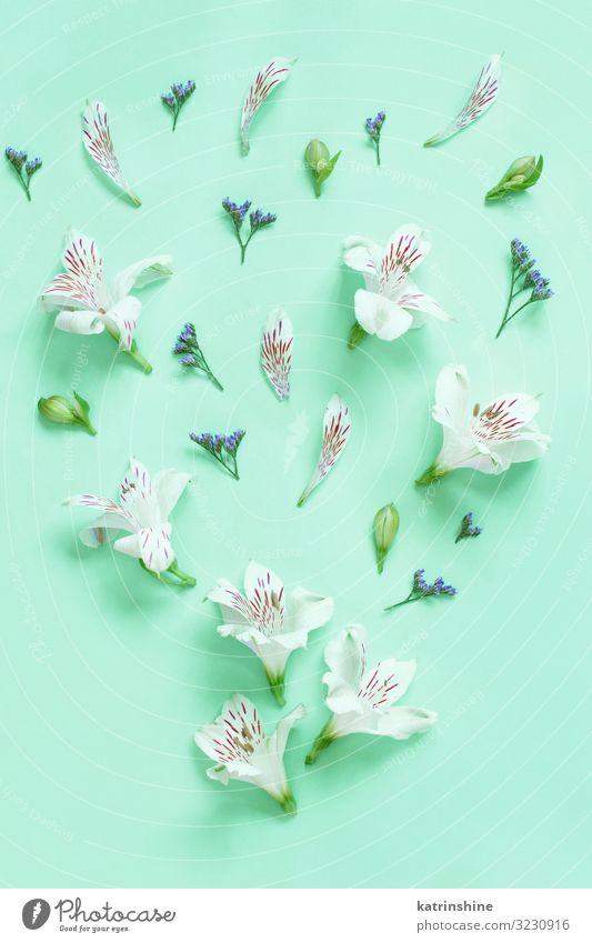 Blumen auf hellgrünem Hintergrund Design Dekoration & Verzierung Hochzeit Frau Erwachsene Mutter oben weiß Kreativität romantisch zartes Grün Minze