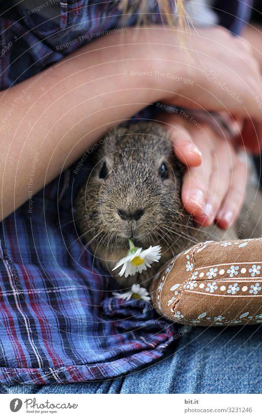 Gänseblümchen für Mausi. Spielen Mensch Kind Haut Arme Hand Finger Tier Haustier Streichelzoo berühren Essen Fressen füttern genießen Blick kuschlig Freude