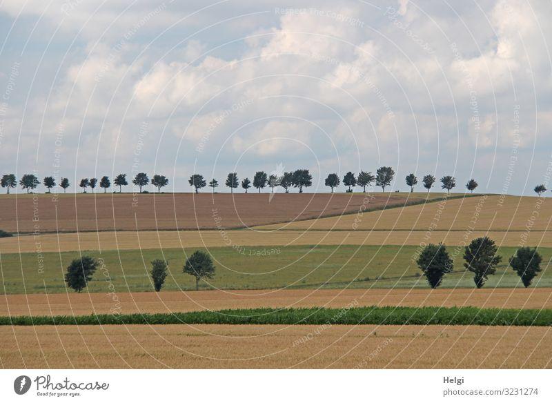 Landschaftsaufnahme von Feldern und Baumreihen mit bewölktem Himmel Umwelt Natur Pflanze Erde Wolken Sommer Gras Nutzpflanze stehen Wachstum ästhetisch
