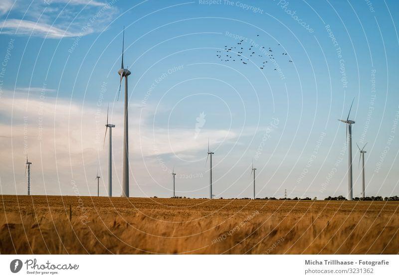 Windräder und Kornfeld Landwirtschaft Forstwirtschaft Energiewirtschaft Technik & Technologie Fortschritt Zukunft Erneuerbare Energie Windkraftanlage Natur