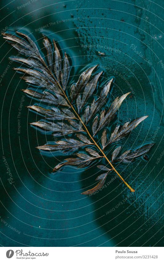 Nahaufnahme Blatt und nassgrüner Hintergrund Umwelt Natur Herbst Winter ästhetisch Coolness authentisch trendy natürlich retro wild Design Farbe Schwerpunkt