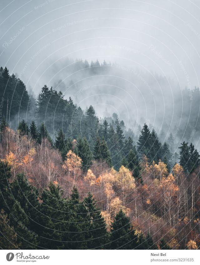 Foggy morning in the Harz Mountains Freizeit & Hobby Ferien & Urlaub & Reisen Tourismus Ausflug Abenteuer Berge u. Gebirge wandern Umwelt Natur Landschaft