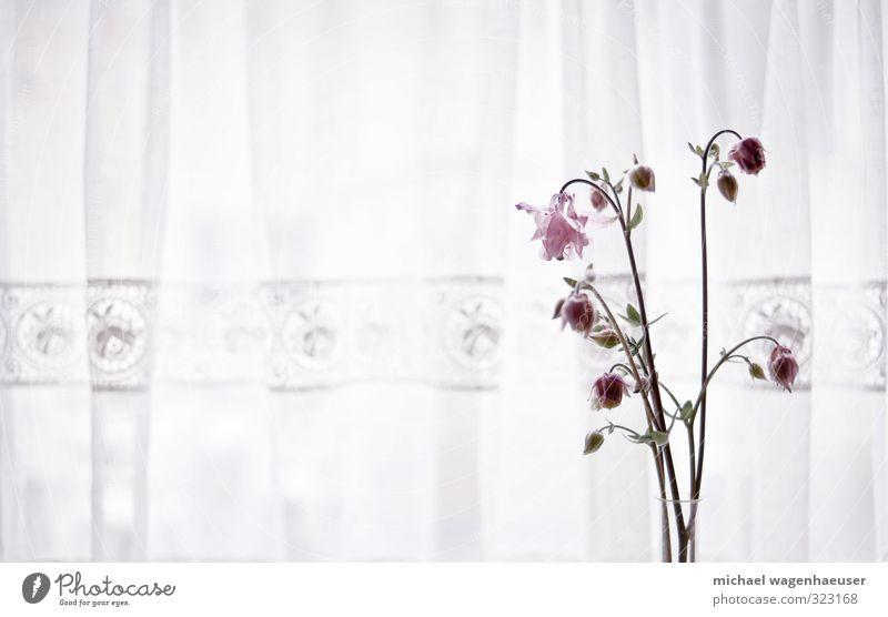Blumen vor Vorhang Häusliches Leben Wohnung einrichten Dekoration & Verzierung Senior Pflanze Blumenstrauß Kitsch Krimskrams träumen Traurigkeit alt Gefühle