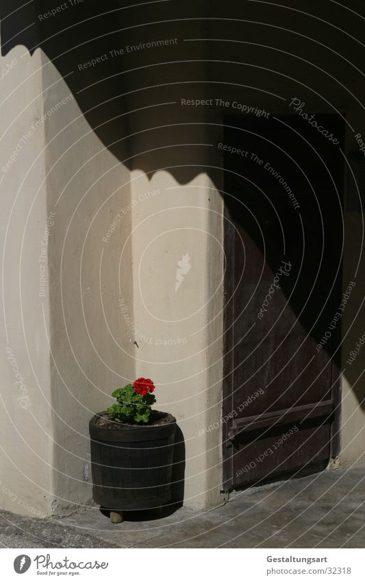 Schönheit ist überall II. Blume rot Wand Blüte braun Tür Europa Ecke Eingang beige Blumentopf Behälter u. Gefäße Pelargonie