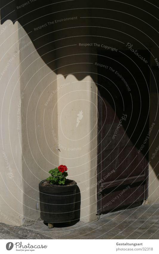 Schönheit ist überall II. Eingang Blumentopf Behälter u. Gefäße Wand braun beige rot Pelargonie Blüte Europa Tür Ecke Schatten.