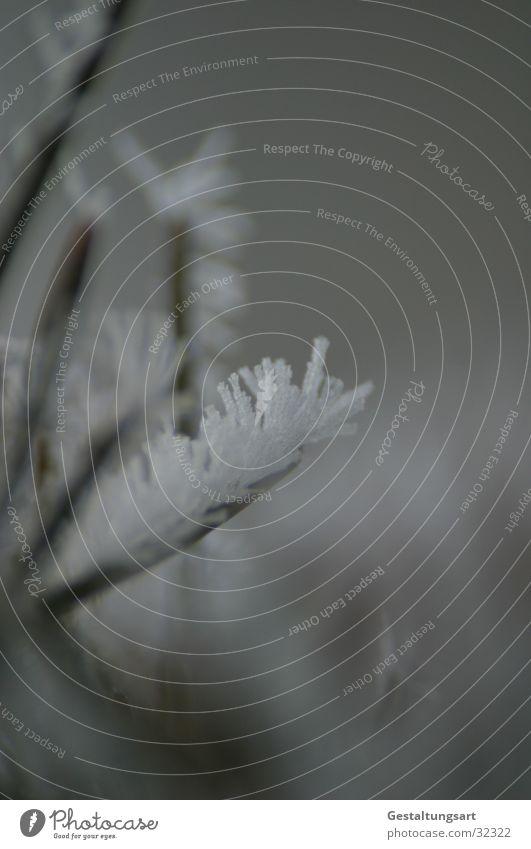 Eisblume IV weiß Winter Schnee Ast Kristallstrukturen Eisblumen Nadelbaum Tannennadel