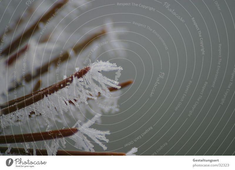Eisblume III weiß Winter Schnee Eis Ast Kristallstrukturen Eisblumen Nadelbaum Tannennadel
