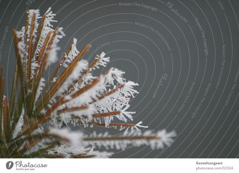 Eisblume II weiß Winter Schnee Ast Kristallstrukturen Eisblumen Nadelbaum Tannennadel