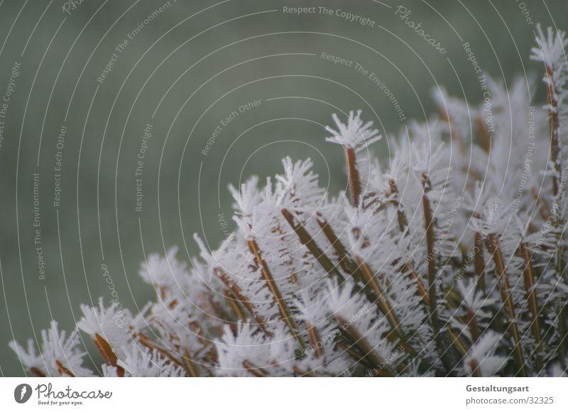 Eisblume I weiß Winter Schnee Eis Ast Kristallstrukturen Eisblumen Nadelbaum Tannennadel