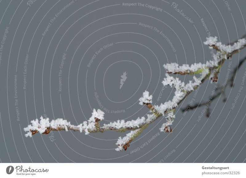 Kirschzweig im Winter weiß Baum Winter Schnee Eis Ast Zweig Kristallstrukturen Kirsche