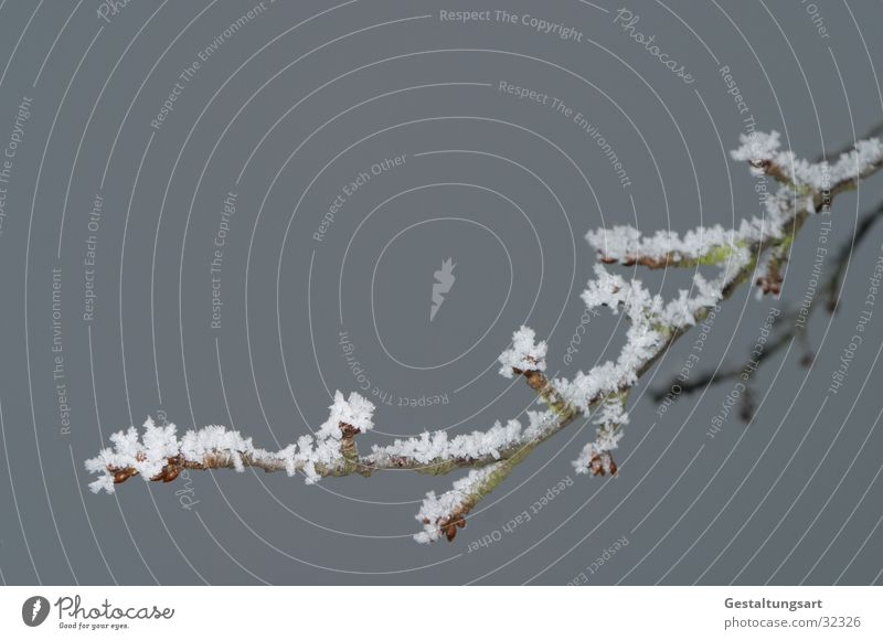 Kirschzweig im Winter weiß Baum Schnee Eis Ast Zweig Kristallstrukturen Kirsche