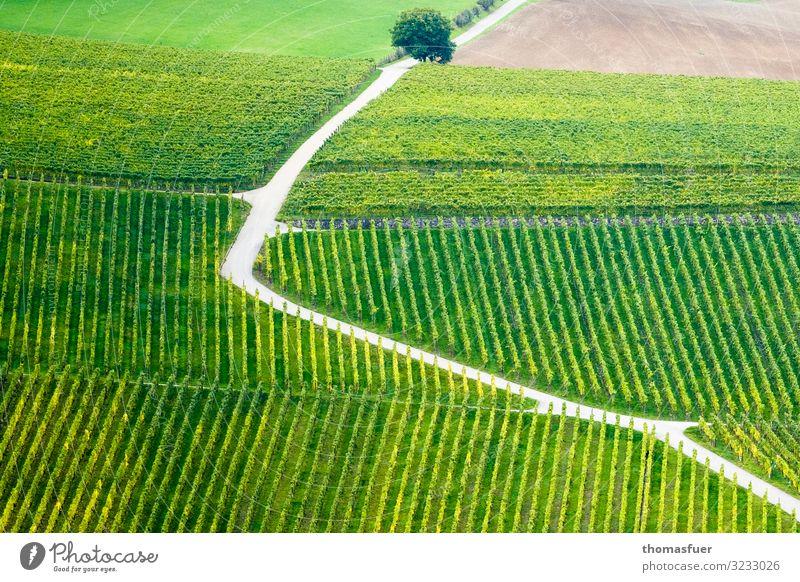 Weg durch Weinberg - aufwärts oder abwärts Ausflug Ferne Sommer Sonne Berge u. Gebirge Weinbau Natur Landschaft Schönes Wetter Baum Nutzpflanze Feld Hügel