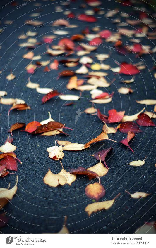 Blattsalat Herbst schlechtes Wetter Pflanze Straße Wege & Pfade liegen verblüht dunkel kalt nass gelb rot Vergänglichkeit Asphalt Anhäufung herbstlich
