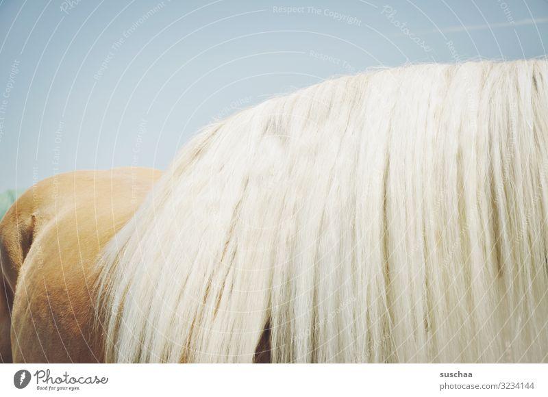 viel mähne Pferd Pferderücken Mähne Haare Pferdehaar Fell üppig (Wuchs) Himmel Reiten Sport Tierliebe Tierpflege Stall Bauernhof Landwirtschaft