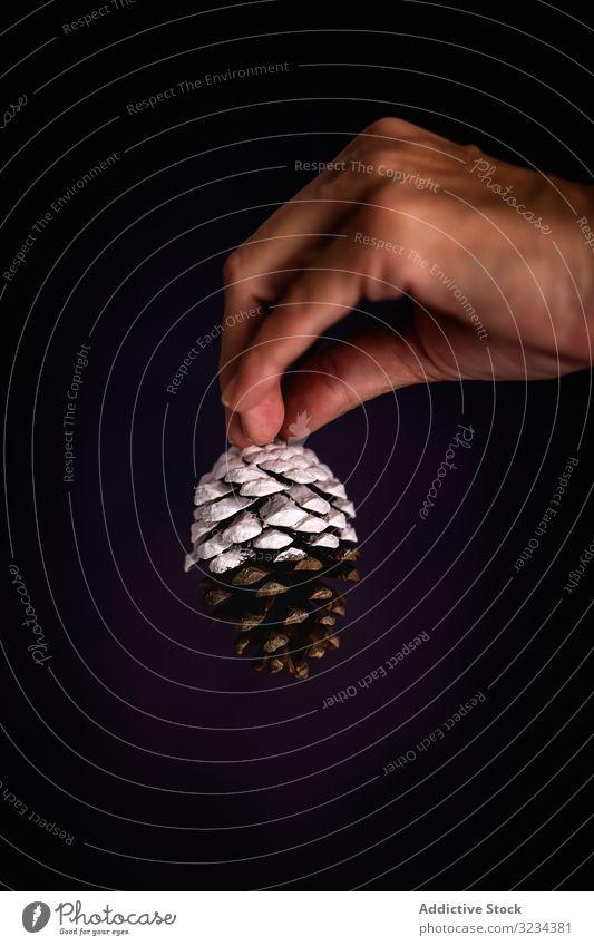 Erntehelfer mit Koniferenzapfen Zapfen Weihnachten Person zeigen Handvoll gemalt Dekor traditionell dunkel festlich Feier Saison Winter Dezember Flora Pflanze