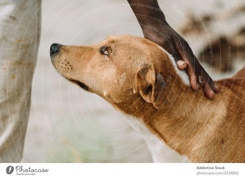 Schwarze Person streichelnder Hund Irrläufer Straße schwarz schlecht Kraulen Haustier Stadt Gambia heimatlos Großstadt Tier Eckzahn Säugetier Mischling Angebot