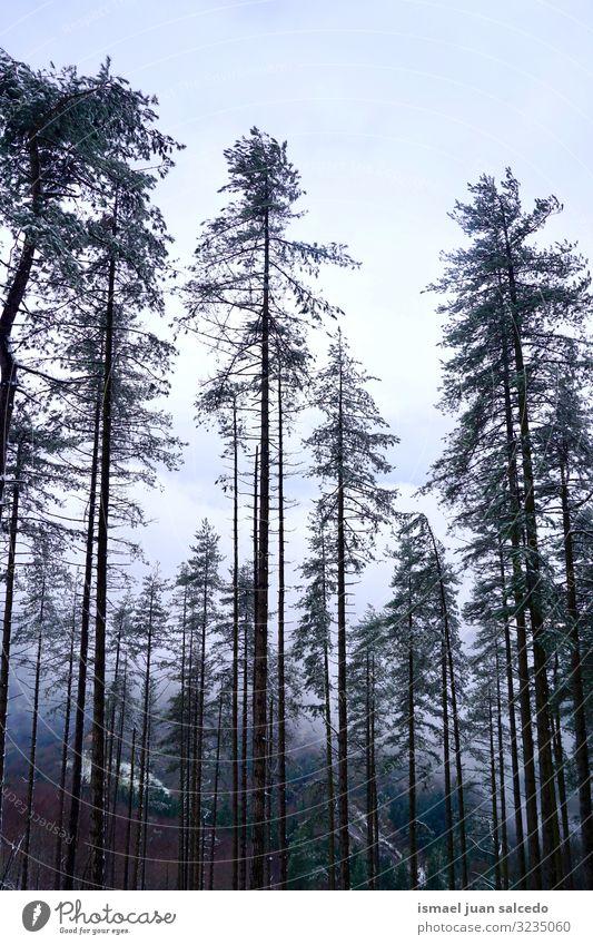 Schnee auf den Bäumen in den Bergen in der Wintersaison Baum Schneefall weiß kalt Frost Eis Szene Wetter gefroren Wald Berge u. Gebirge Natur Landschaft