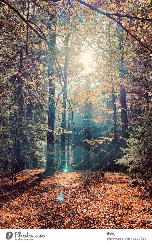 Herbstlicht Natur Pflanze Sonne Baum Wildpflanze Laubwald Ast Zweig Jahreszeiten Wald Erholung Idylle Vergänglichkeit Wachstum Wandel & Veränderung Farbfoto
