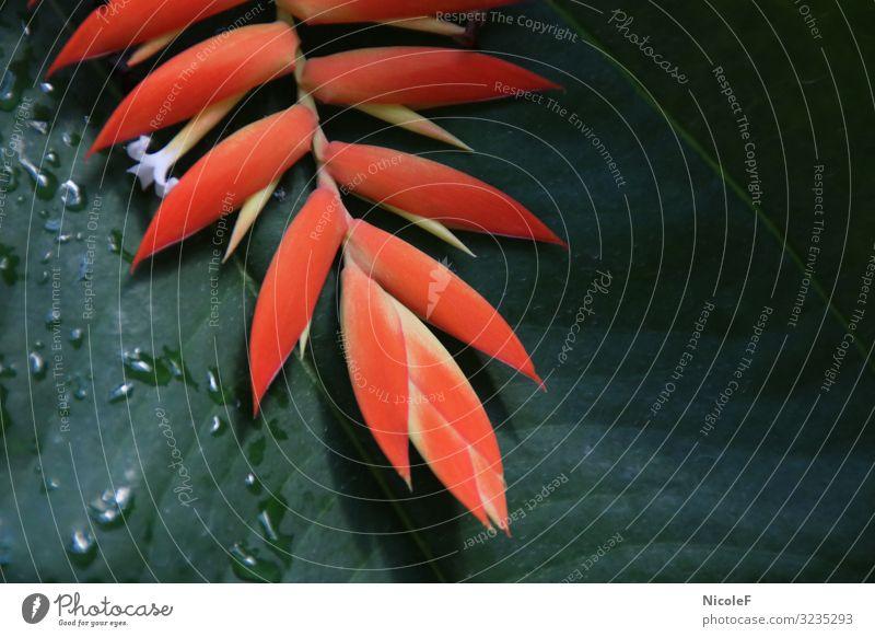 orange auf grün Natur Pflanze Tier Sommer Blume Blatt Blüte Garten Park weiß Farbfoto Außenaufnahme Menschenleer