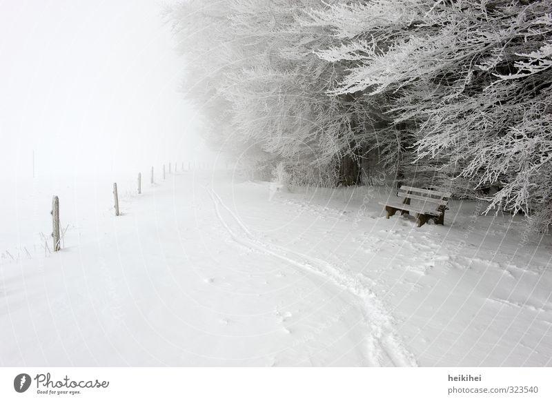 WINTER Ferien & Urlaub & Reisen Ausflug Ferne Freiheit Winter Schnee Winterurlaub Sport Skifahren Umwelt Natur Landschaft Wetter schlechtes Wetter Nebel Eis