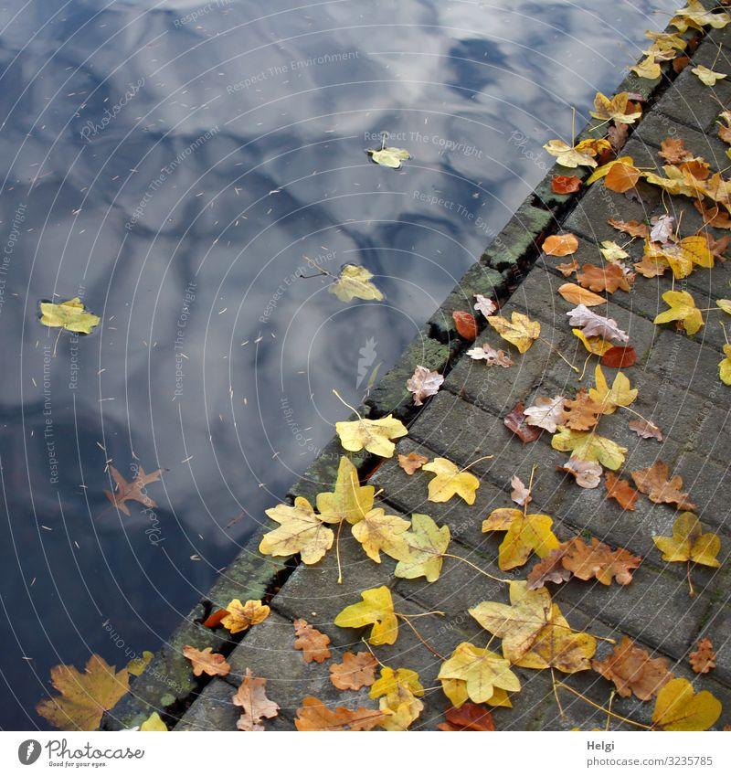 buntes Herbstlaub liegt auf einem Fußweg am Seeufer Umwelt Natur Pflanze Wasser Himmel Wolken Schönes Wetter Blatt Steg Holz liegen Schwimmen & Baden ästhetisch