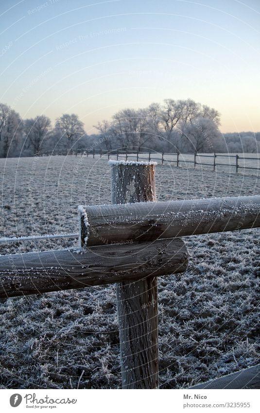 kalter morgen Umwelt Natur Landschaft Wolkenloser Himmel Winter Klima Schönes Wetter Eis Frost Schneefall Feld Wald Zaun Weidezaun Raureif Holzzaun