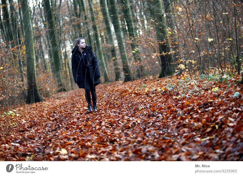 waldläufer Freizeit & Hobby Ferien & Urlaub & Reisen wandern feminin Junge Frau Jugendliche 1 Mensch 18-30 Jahre Erwachsene Umwelt Natur Herbst Baum Blatt Wald