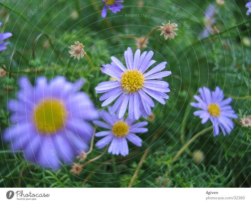 Lila Natur Blume grün Pflanze violett tief