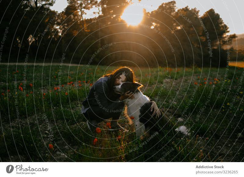 Frau küsst Hund auf der Wiese Kuss Sonnenuntergang Borte Collie Bäume Liebe Pflege Haustier Umarmung Glück Tier jung Natur schön Landschaft Zuneigung Eckzahn