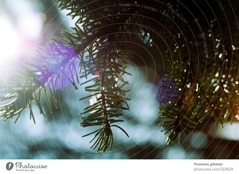 Sunlight Umwelt Natur Sonne Frühling Pflanze Baum Garten Park Wald grün violett Farbfoto Außenaufnahme Detailaufnahme Menschenleer Morgen Licht Kontrast