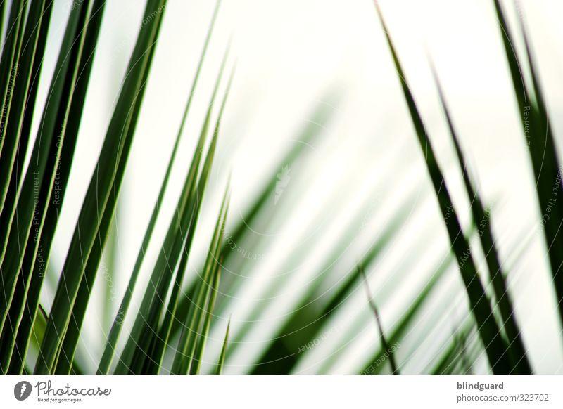 Welcome To The Jungle Natur grün weiß Pflanze ruhig schwarz Gras Zufriedenheit Tourismus Wachstum Ausflug einfach Hoffnung Landwirtschaft Wellness dünn