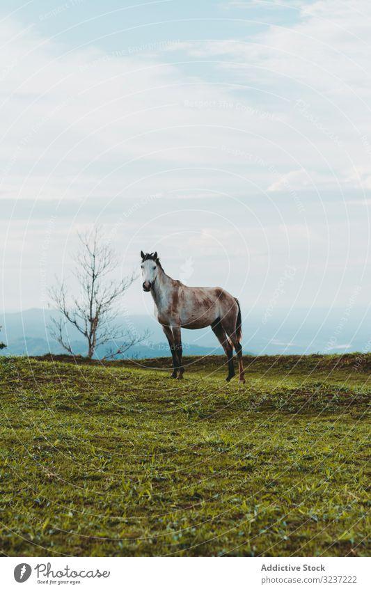 Pferd auf grünem Rasen in der Landschaft Weidenutzung Wiese Straße Bauernhof Ranch Ackerland Gras Tag Baum ländlich züchten Natur sonnig braun Rind malerisch