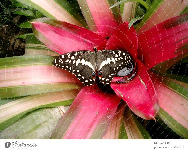 Schmetterlingsblume Natur Blume Tier Garten Schmetterling Kaktus