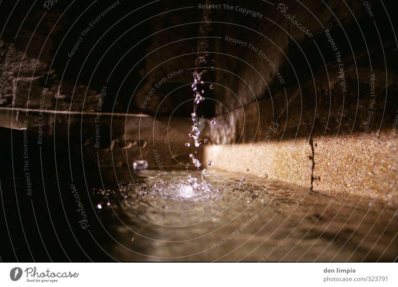 klares tauwasser Wand Herbst Mauer klein glänzend frisch Wassertropfen nass rein Flüssigkeit analog Qualität Wasserstelle
