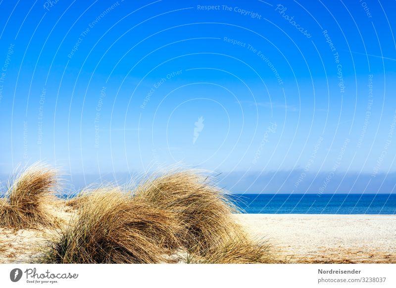 Dünengras am Ostseestrand Ferien & Urlaub & Reisen Tourismus Camping Sommer Sommerurlaub Sonne Strand Meer Insel Natur Landschaft Sand Wasser Wolkenloser Himmel