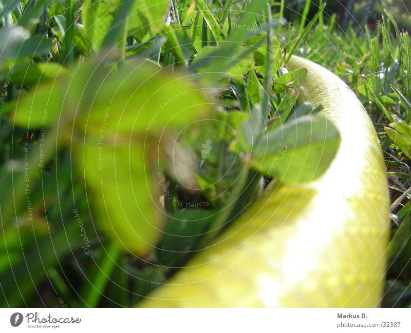 yellowSnake Schlauch Gartenschlauch gelb grün Wasserschlauch Klee Makroaufnahme Nahaufnahme