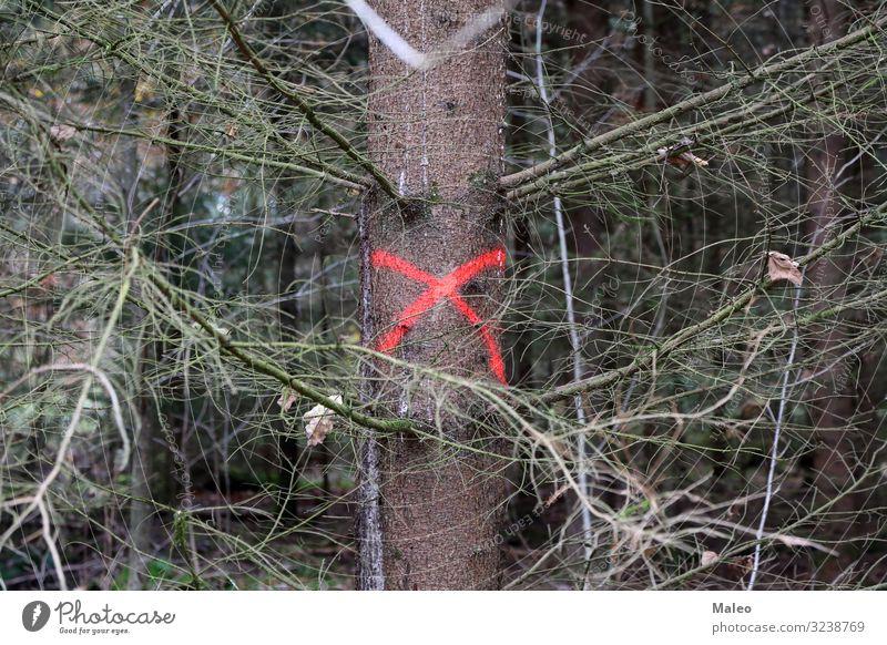 Ein Baum im Wald ist markiert Herbst Kreuz Abholzung ökologisch Umgebung Umwelt Blatt Management Forstwirtschaft grün Industrie Holz kennzeichnen Natur Kiefer