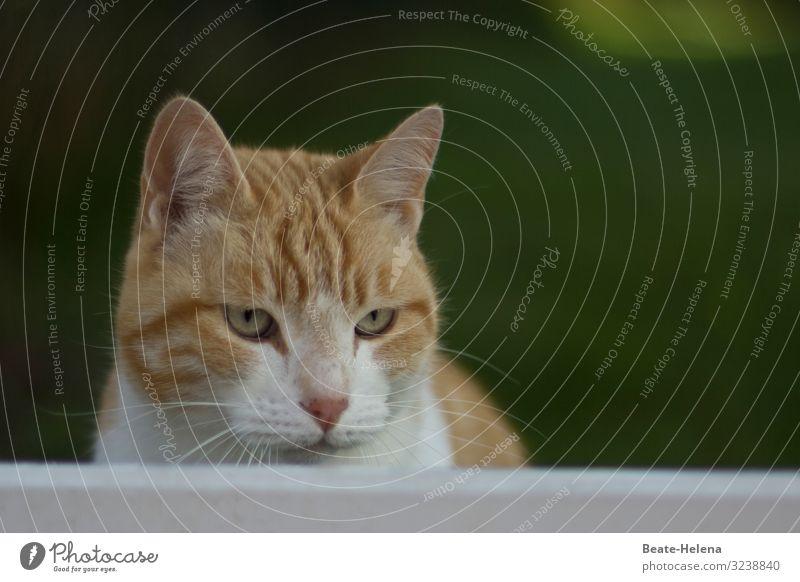Boring Monday Zufriedenheit Erholung Meditation Tier Haustier Katze Tiergesicht beobachten Denken entdecken Blick träumen warten Häusliches Leben ästhetisch