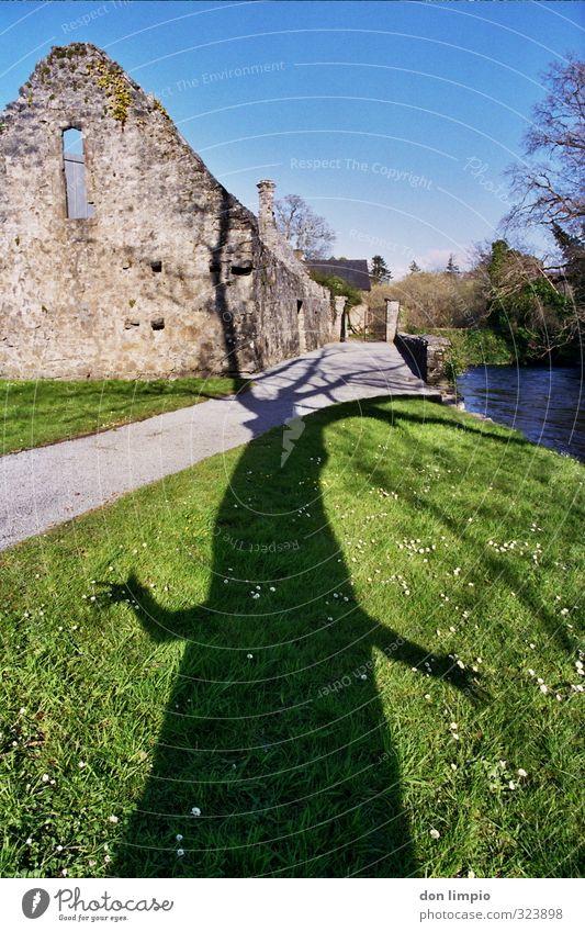 brrrrrr...knarz... baum monster natur groß Baum Farbfoto Umwelt Außenaufnahme grün fabel Pflanze Schönes Wetter Ruine Cong.Co Mayo Irland Park