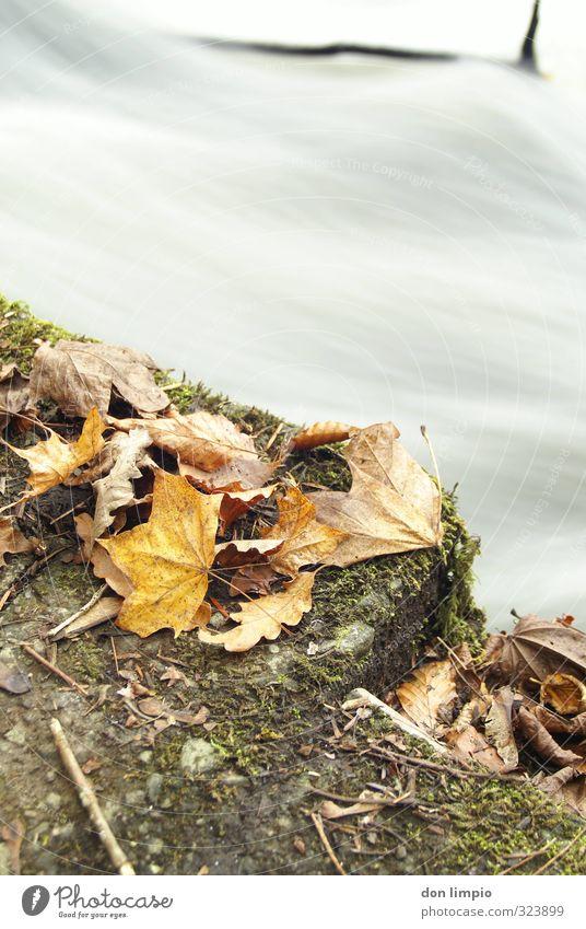 Herbst Natur Blatt Umwelt kalt Fluss Flussufer fließen welk Haufen Rauschen dehydrieren gelbgold