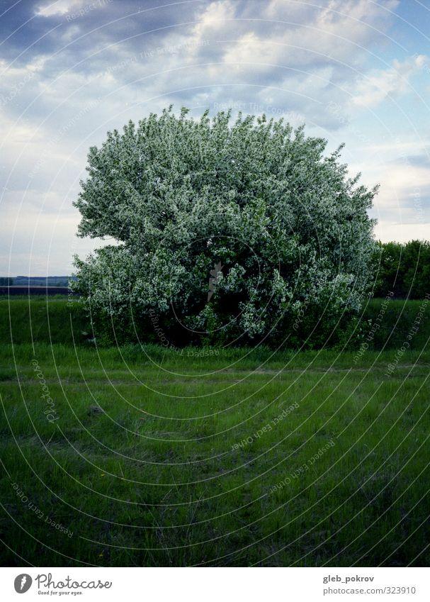 Baum Natur Landschaft Pflanze Wolkenloser Himmel Sommer Schönes Wetter Gras Nutzpflanze Feld Vertrauen Romantik schön Gelassenheit Farbfoto Außenaufnahme