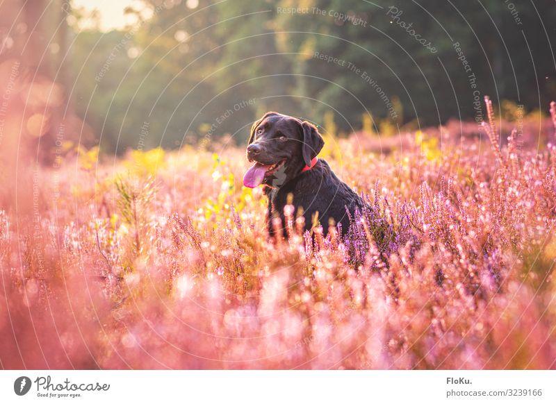 Me like it here Natur Hund Pflanze schön Blume Tier Freude Herbst Wärme Umwelt Wiese Glück rosa Feld Fröhlichkeit Lebensfreude