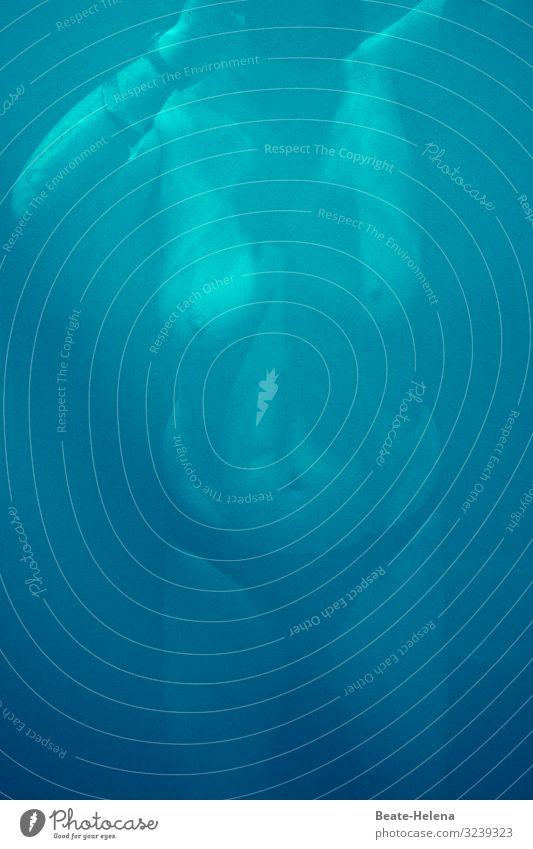 Unterwasserwelt Ferien & Urlaub & Reisen blau Wasser Erholung ruhig Gesundheit natürlich feminin Sport Bewegung Spielen außergewöhnlich Schwimmen & Baden