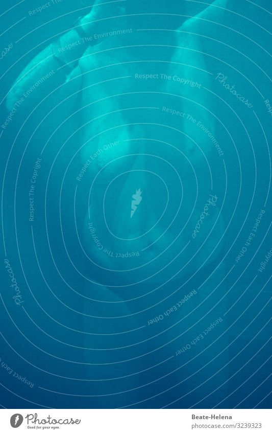 Unterwasserwelt Gesundheit sportlich Fitness Wellness Erholung ruhig Freizeit & Hobby Ferien & Urlaub & Reisen Sport Wassersport Schwimmen & Baden tauchen