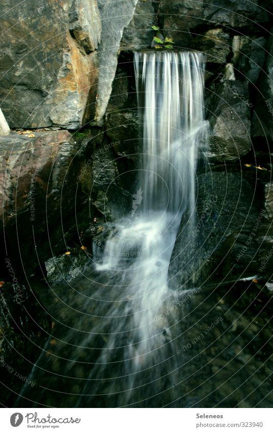 Langzeit harmonisch Zufriedenheit Sinnesorgane Erholung ruhig Umwelt Natur Wasser Park Bach Fluss Wasserfall frisch nass natürlich Farbfoto Außenaufnahme