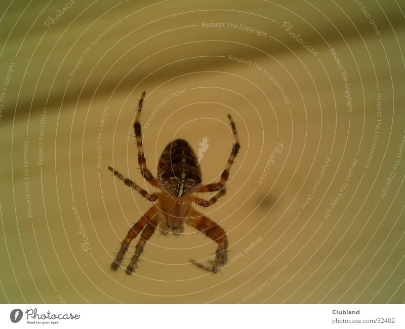 SPiNNE Spinne Kreuzspinne Makroaufnahme Verkehr SPIDER Nahaufnahme MACROAUFNAHME
