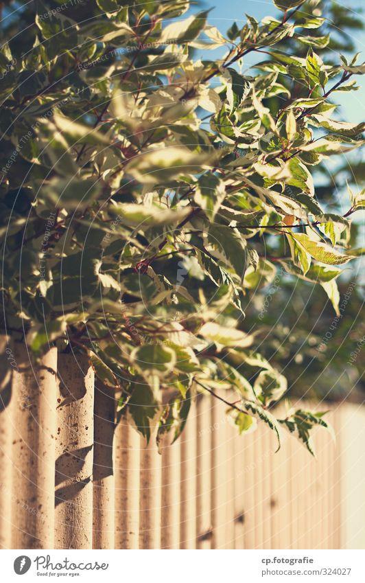 Wellblech unter Busch Schönes Wetter Sträucher Garten Zufriedenheit Zaun Gedeckte Farben Außenaufnahme Menschenleer Textfreiraum unten Tag