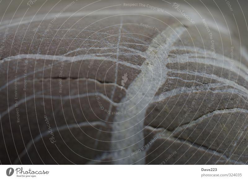 White Lines Natur Stein Quarz Linie ästhetisch braun grau weiß Beginn chaotisch Wege & Pfade kreuzen Gedeckte Farben Makroaufnahme Textfreiraum links Kontrast